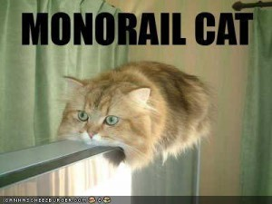 Funny-pictures-monorail-cat1